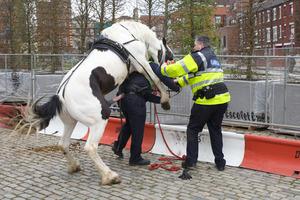 Horse Mounts Garda in Ireland: Stallion Tells Cop to Take ...